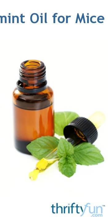 peppermint oil and mice review