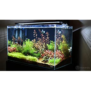 finnex planted+ 24 7 fully automated aquarium led review