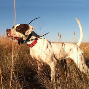 steve courtney dog training reviews