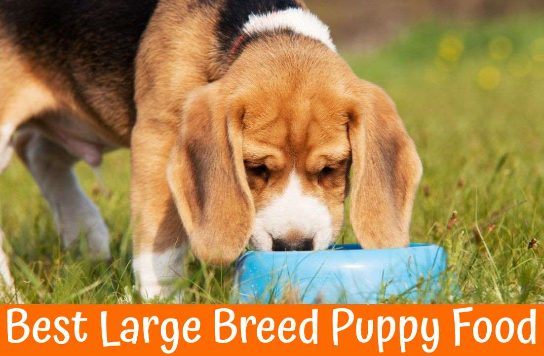 wellness large breed dog food reviews