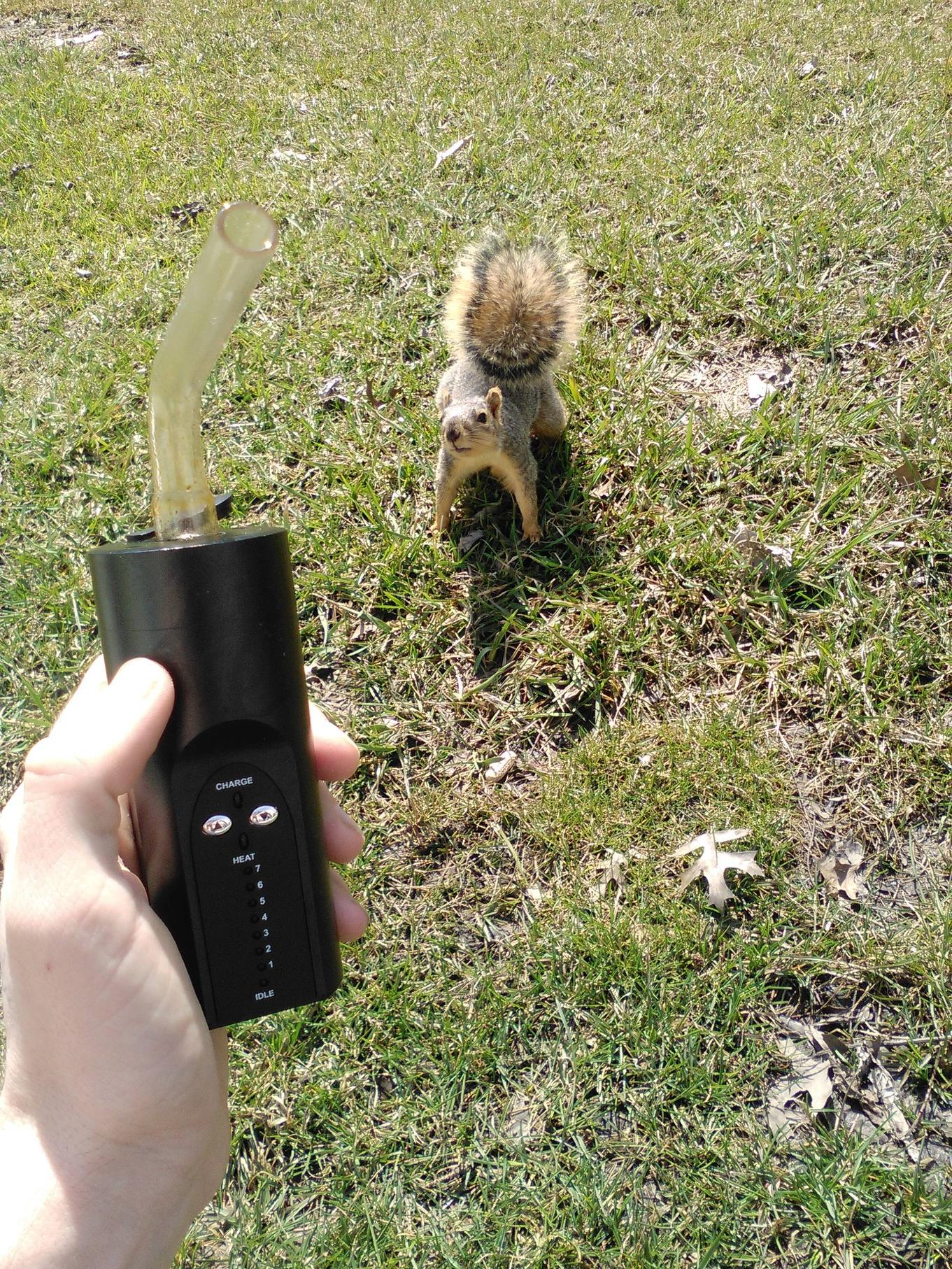 arizer extreme q review reddit