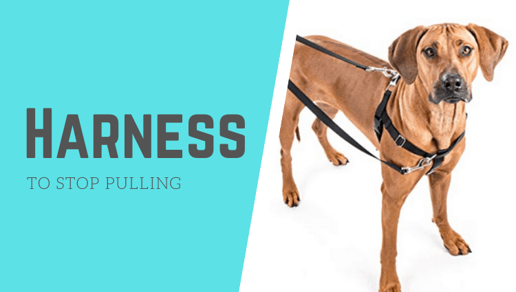 dog harness to stop pulling reviews