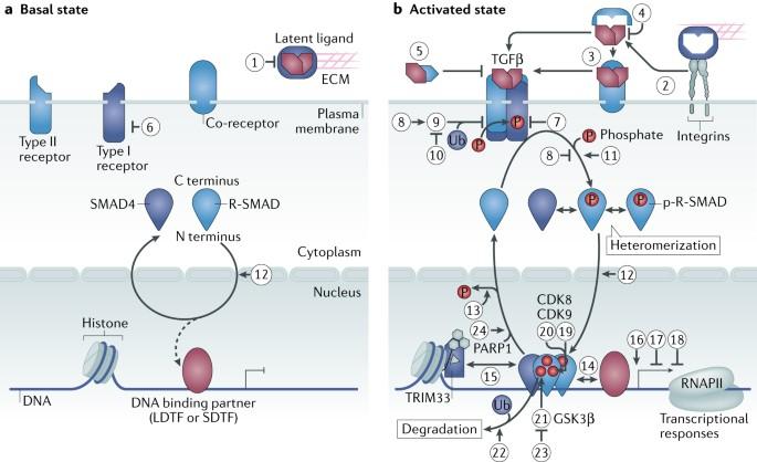 nature reviews molecular cell biology impact factor