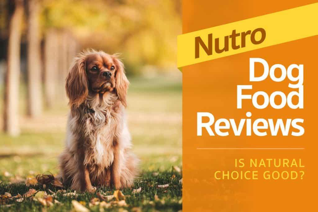 big dog pet foods review