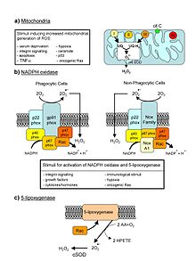 oxy e cellular oxygen enhancer reviews