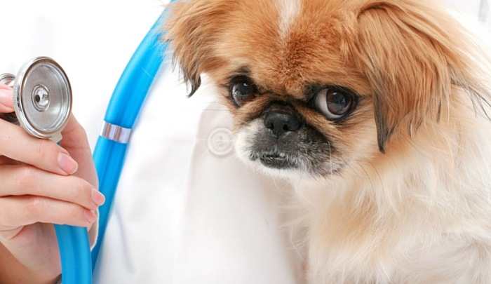 pet insurance reviews for dogs